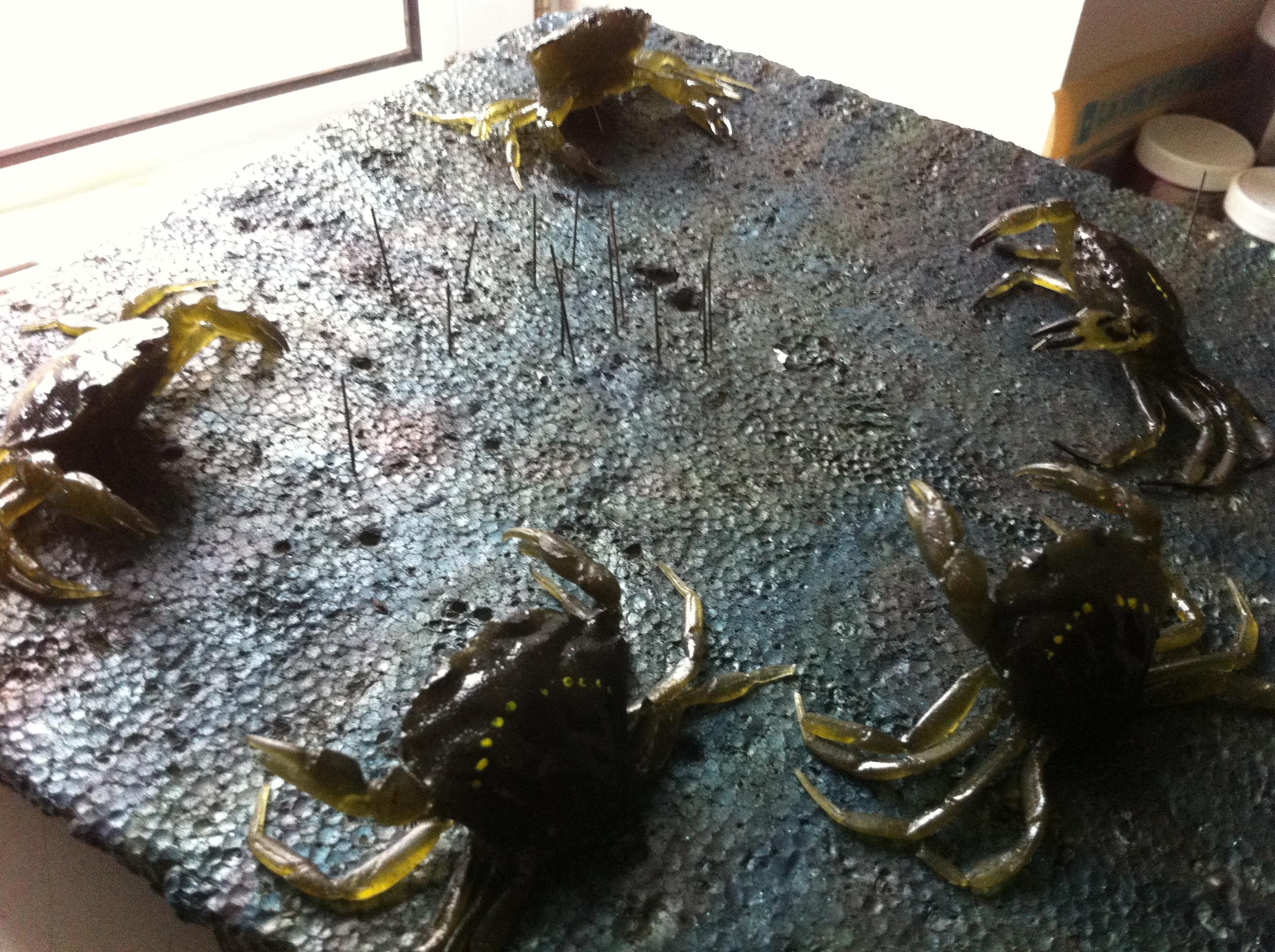L'Aber Crab : Une nouvelle friandise pour la pêche du bar !